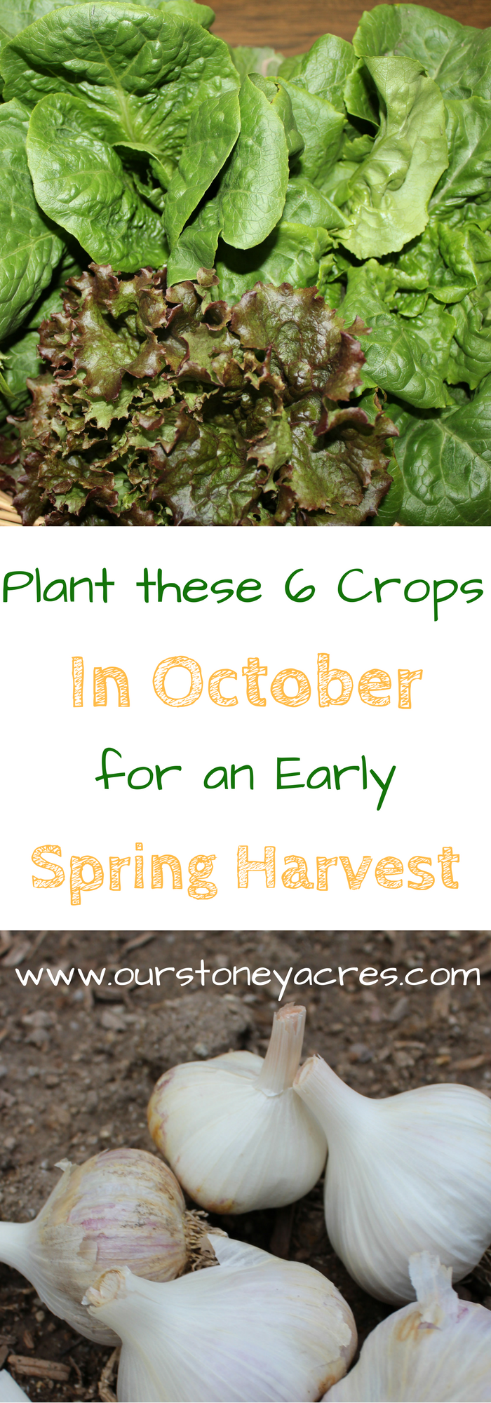 october planting guide 3 as the weather cools and you start