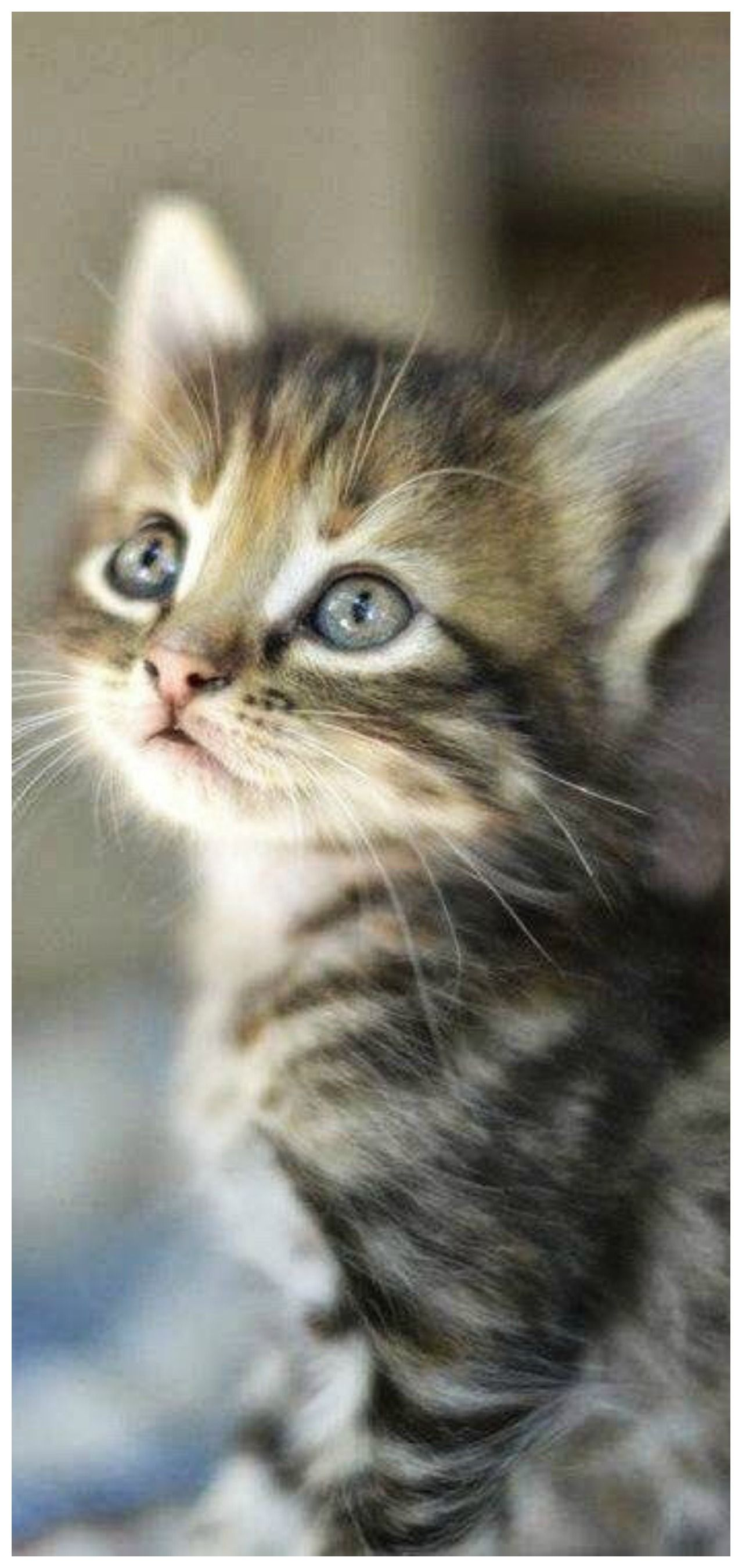Pin By Isabel Cristina Isabel On The Pet Store Kittens Cutest Kitten Adoption Cute Cats