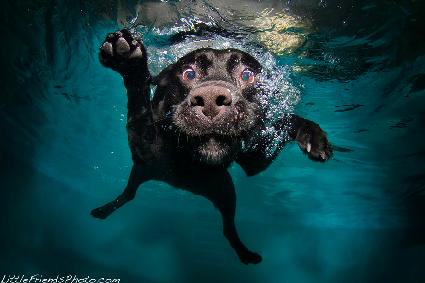 Inspiration Hut - Underwater Dogs by Seth Casteel