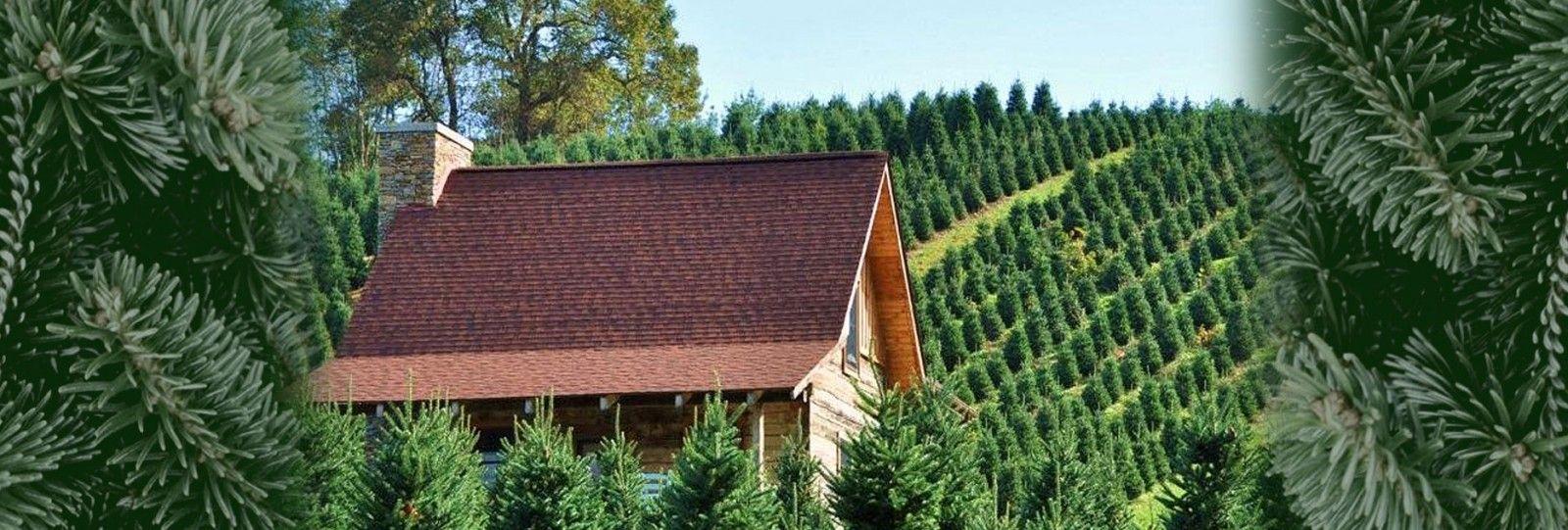 Boyd Mountain Christmas Tree Farm Christmas Tree Farm Tree Farms Colorado Blue Spruce