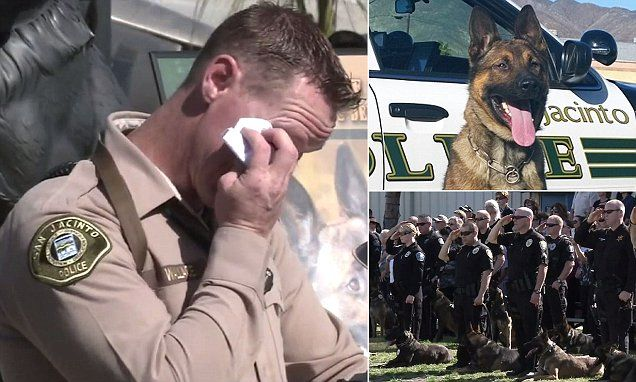 Hundreds attend memorial for gunned down California police dog