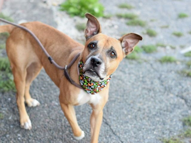 Mimi A1092295 Brooklyn Please Share To Be Destroyed 10 25 16 A Volunteer Writes Lovely Mimi 7 Years Young With A Lovely Gr Dogs Animals Pet Life