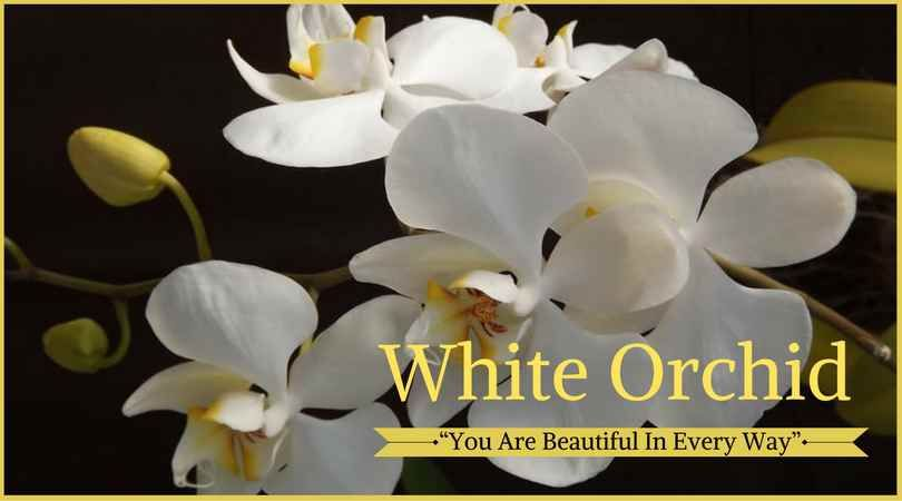10 best funeral flowers funeral flowers flower meanings and funeral funeral flower meanings white orchid meaning white orchids which mean precious and rare are appropriate for the funeral of a baby or young child mightylinksfo