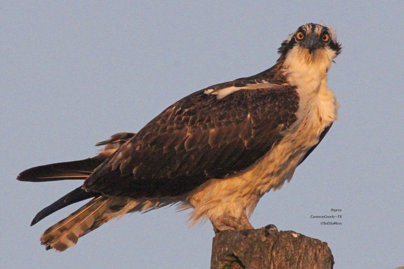 Backyard Birding Magazine - [audidatlevante.com]