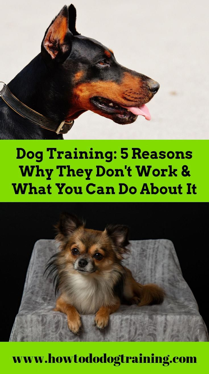 Need Help With Puppy Training Look At These Tips When Training