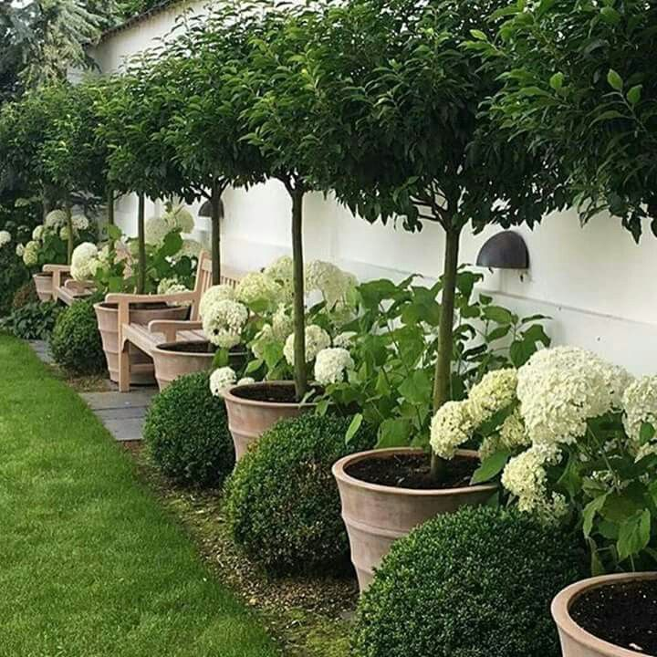 Beautiful trees in pots, lining a green space (lawn or turf ...