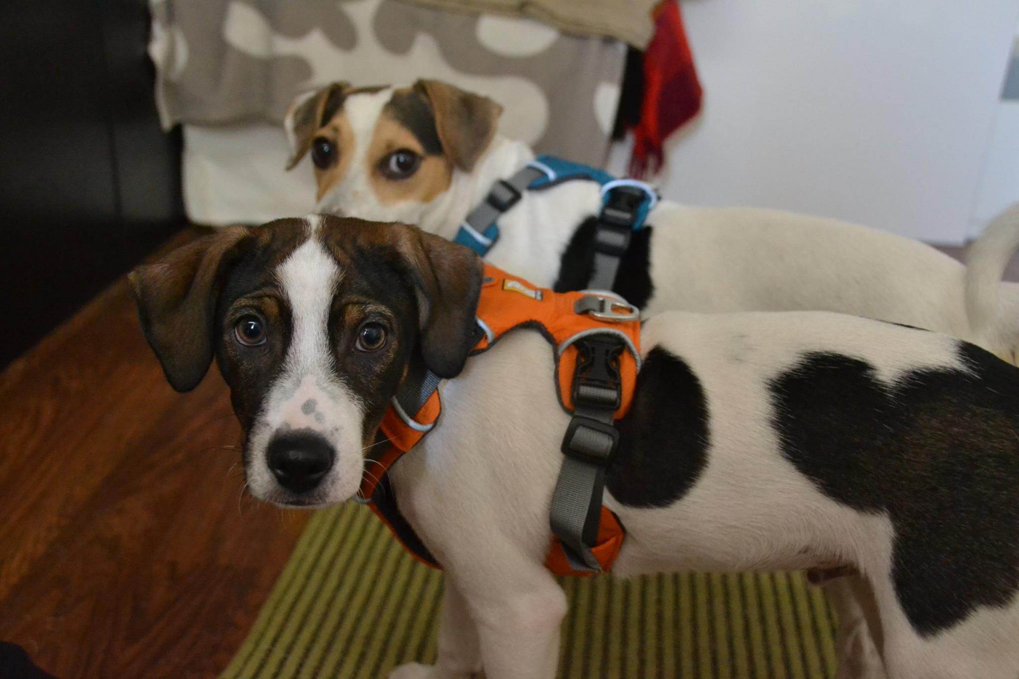 Puppy collar size uk