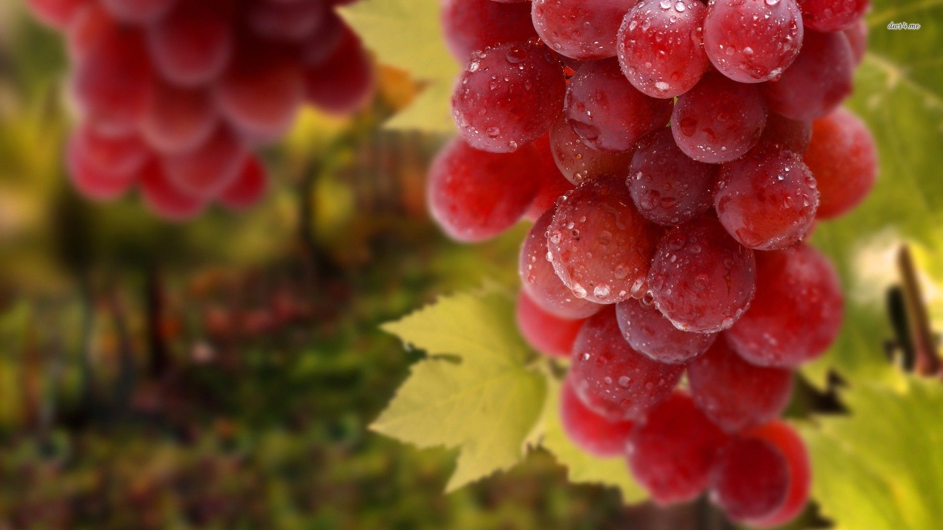 Grapes Hd Desktop Background Wallpapers Hd Free 522119 Grapes Grape Wallpaper Red Grapes