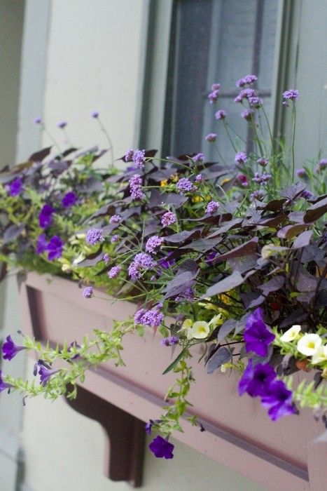 Beautiful idea for a window box...#coopersmithandson #gardening