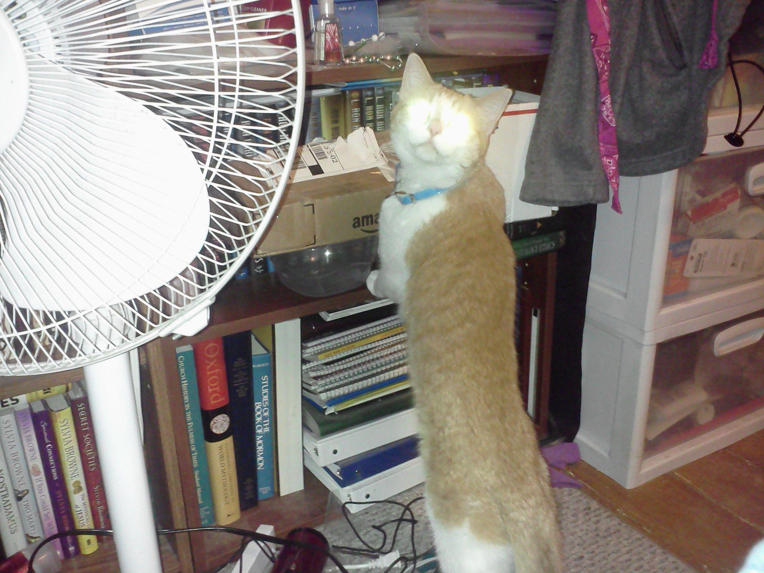 This is my cat Bella... Box fan, Furry friend, Home
