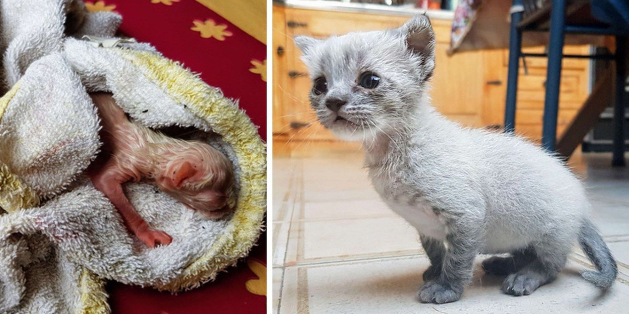Kitten Found on Roof Meowing for Help Hours After Birth