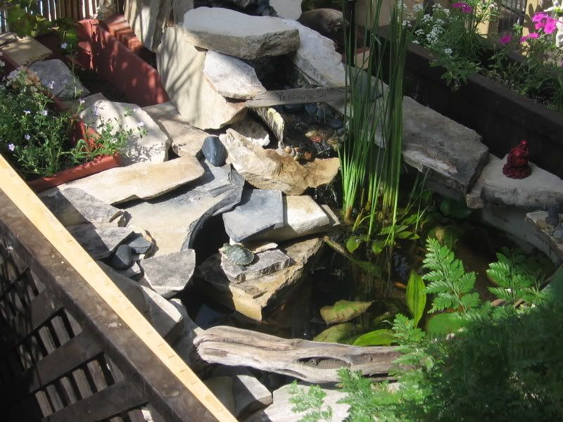 Diy pond made from a rubbermaid tote outdoor diy for Do it yourself koi pond
