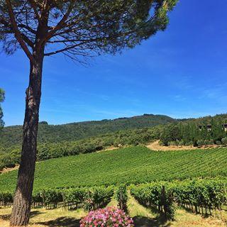 Vineyards of Castello D'Albola