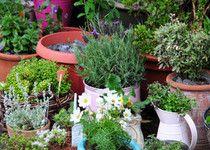 Gardening 101: Crops in pots