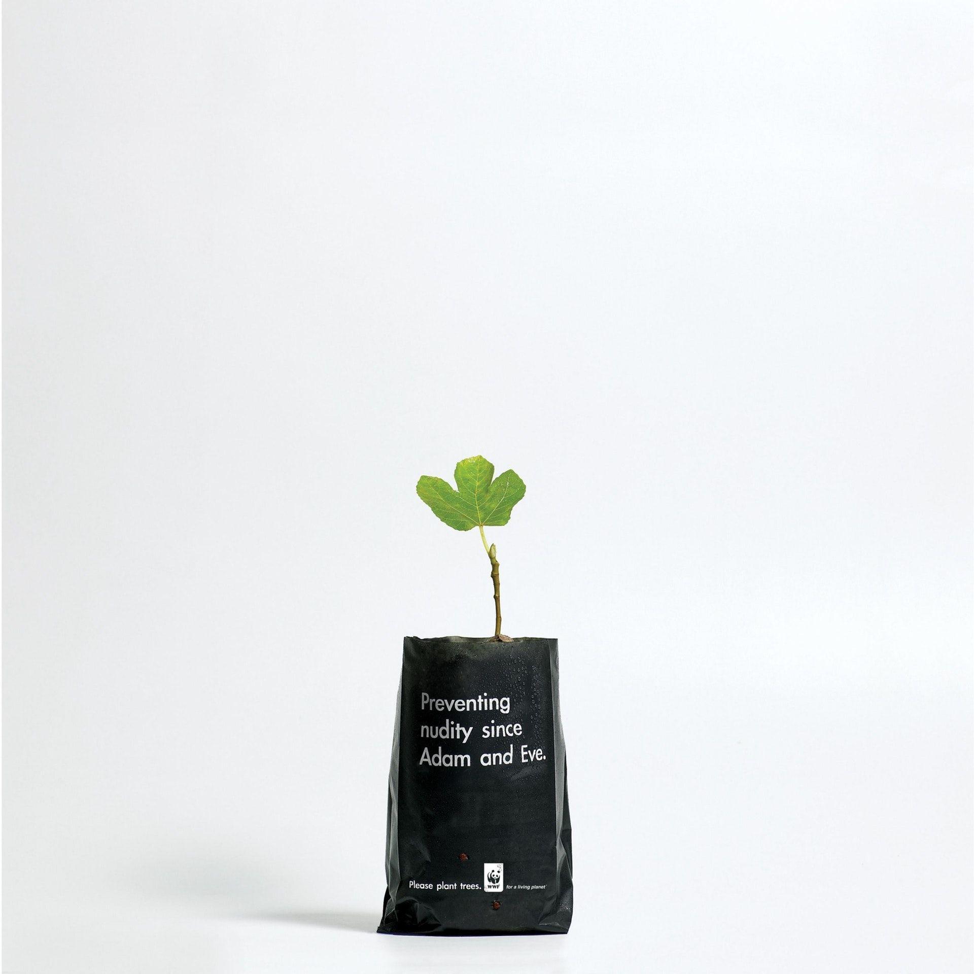 Presentation Image Trees to plant, Plants, Tree