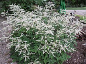 Pollinators Penn State Master Gardeners Moon Garden Plants Landscape Projects
