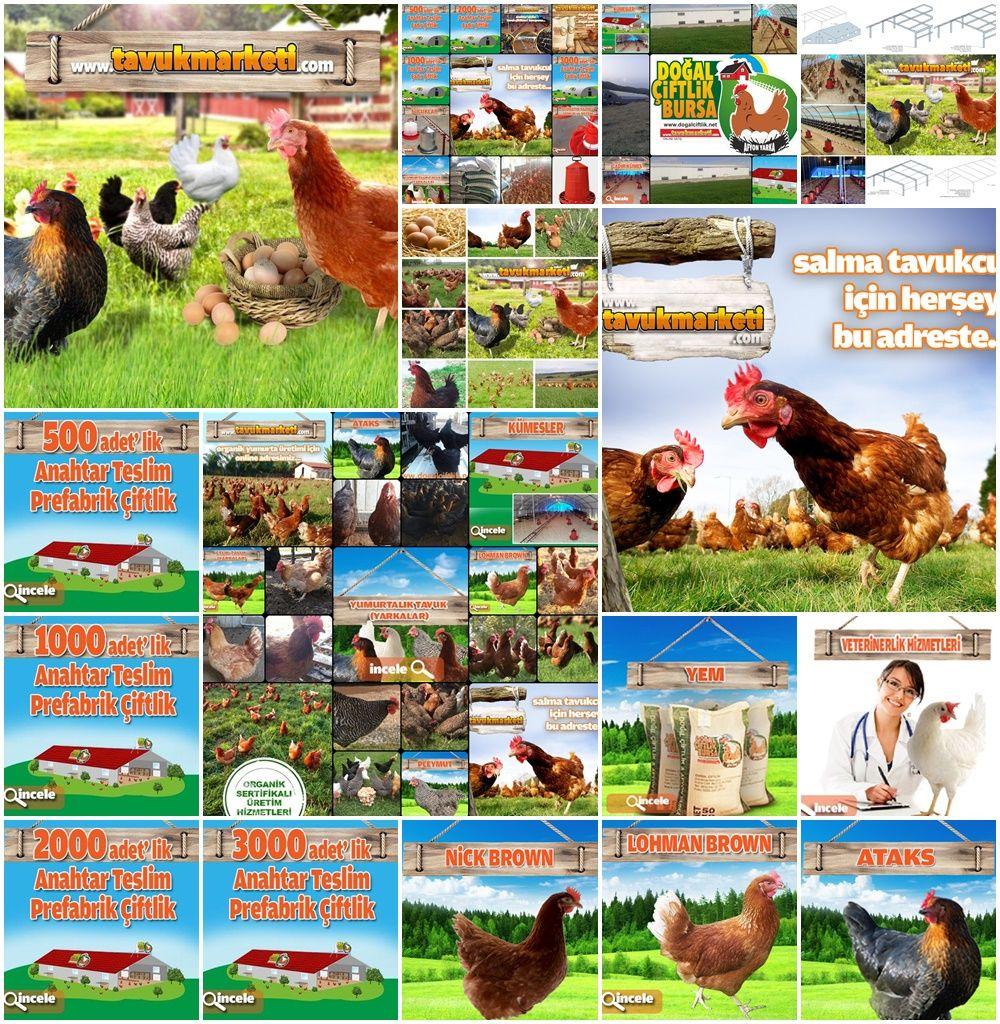 1000 Tavukluk çiftlik Fiyatları Tavuk çiftlliği