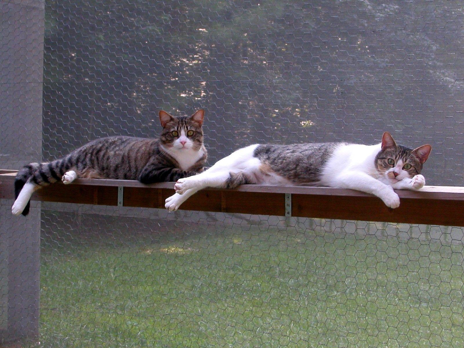 Diy Cat Shelves | Build Your Own Catio Cat Enclosure Accessories