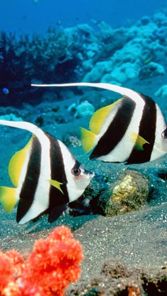 Top 5 Incredibly Beautiful Fishes Beautiful Fish Ocean Animals Water Animals