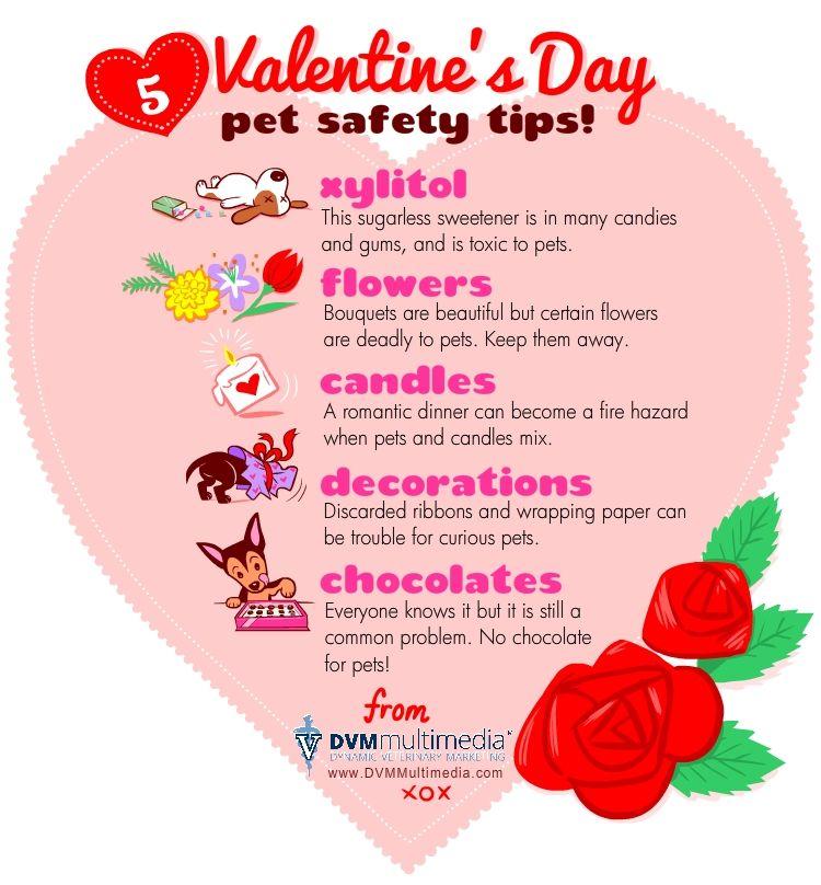Valentine S Day Pet Safety Pet Safety Animal Valentine Pet Hacks