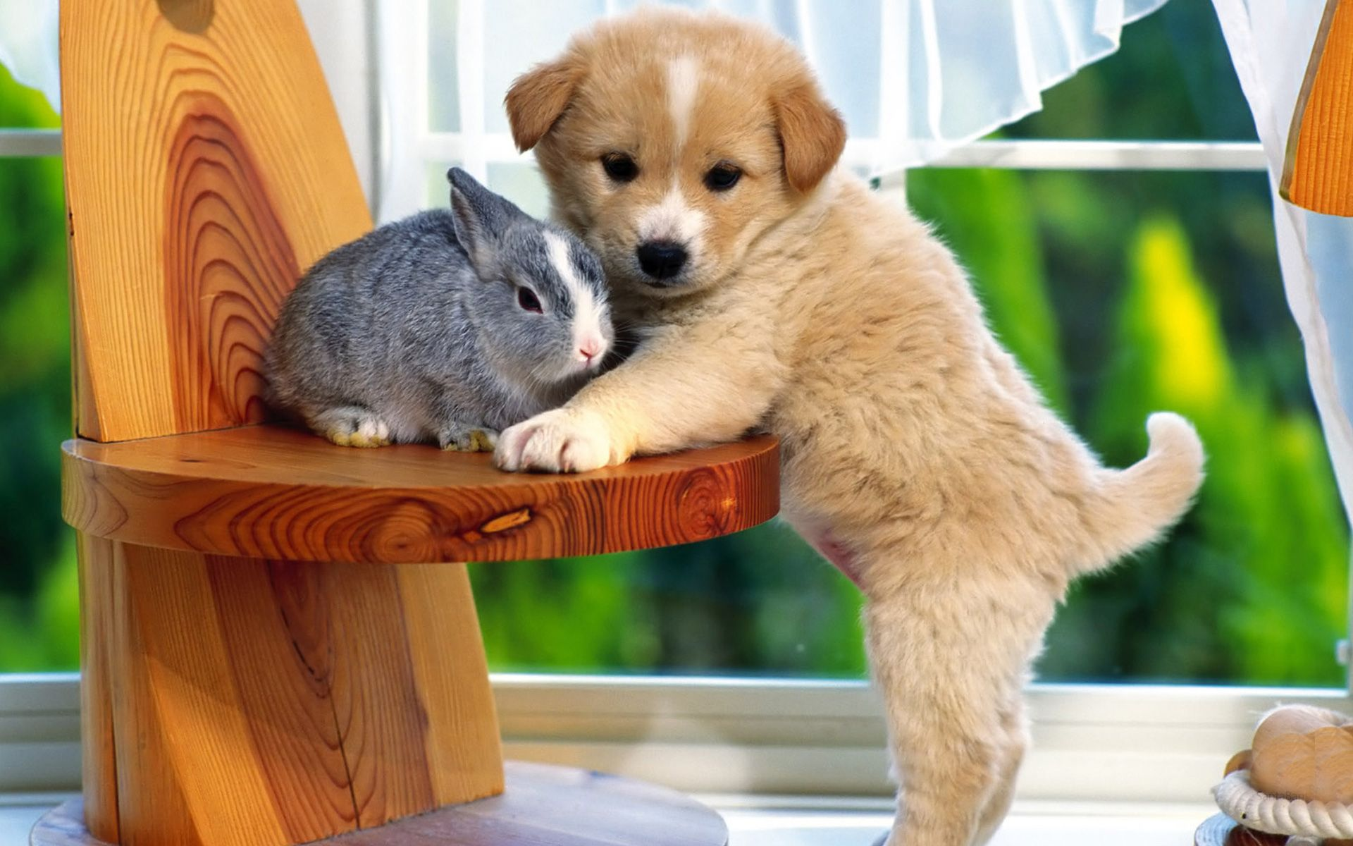 Kitty and Puppy hd wallpaper Free,Download,HD Wallpapers