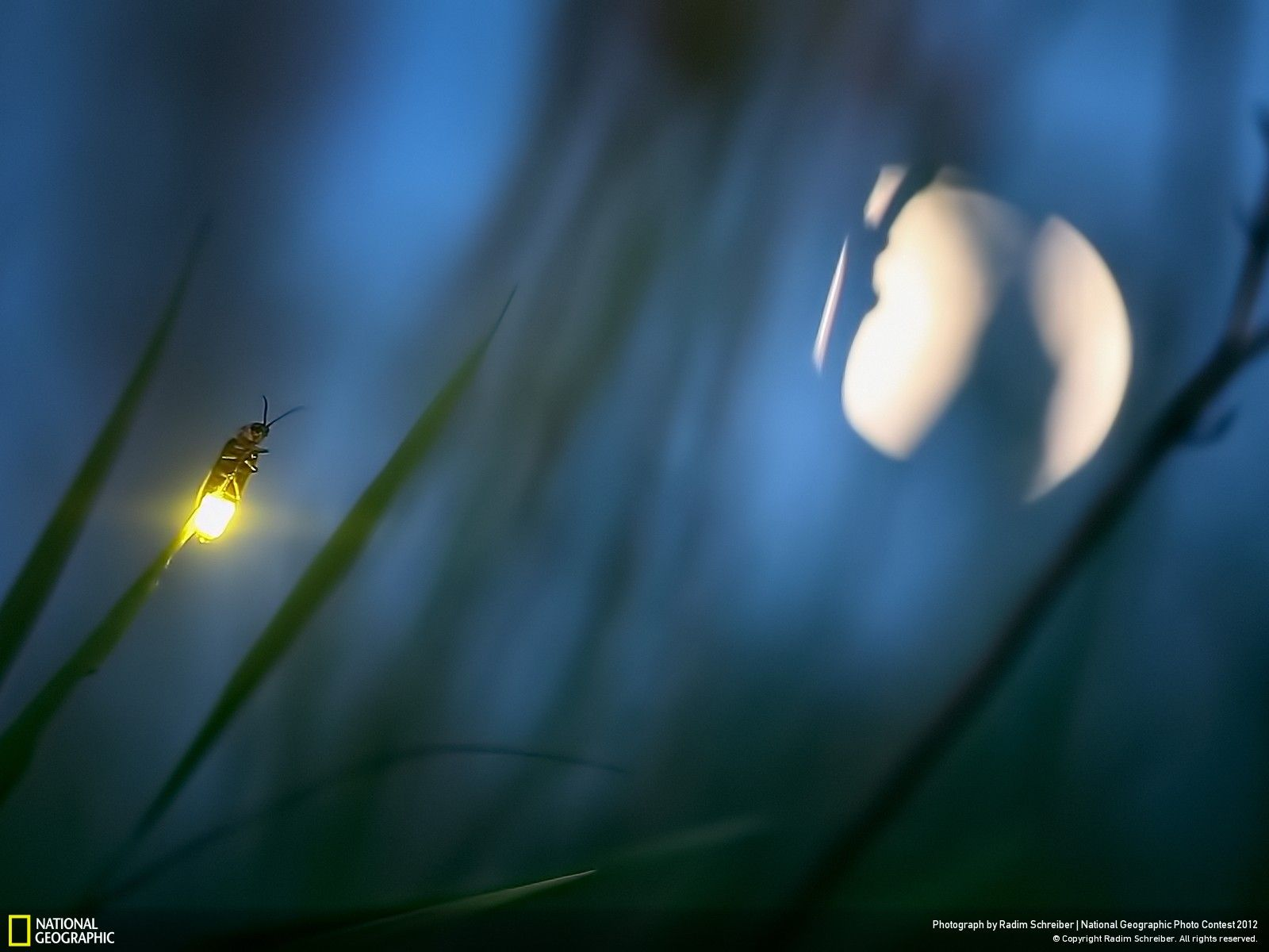 Nature - Week 13 Gallery - National Geographic Photo Contest 2012 ... for Firefly Insect Wallpaper  110zmd