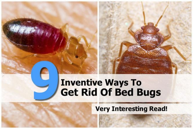 How To Get Rid Of Bed Bugs Using Steam Rid Of Bed Bugs Bed Bugs Bugs