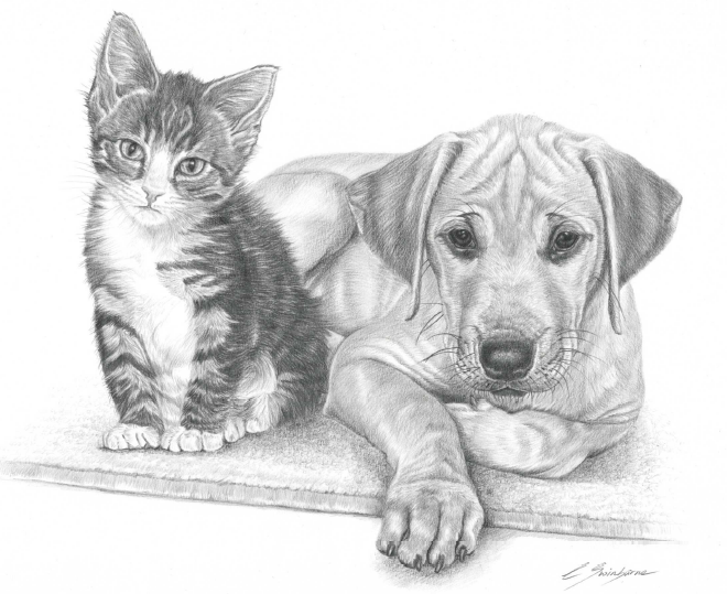 Leisure Painter And The Artist Uk Magazines Painters Online Kitten Drawing Animal Sketches Animal Drawings