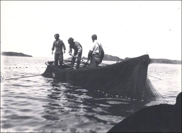 cod trap