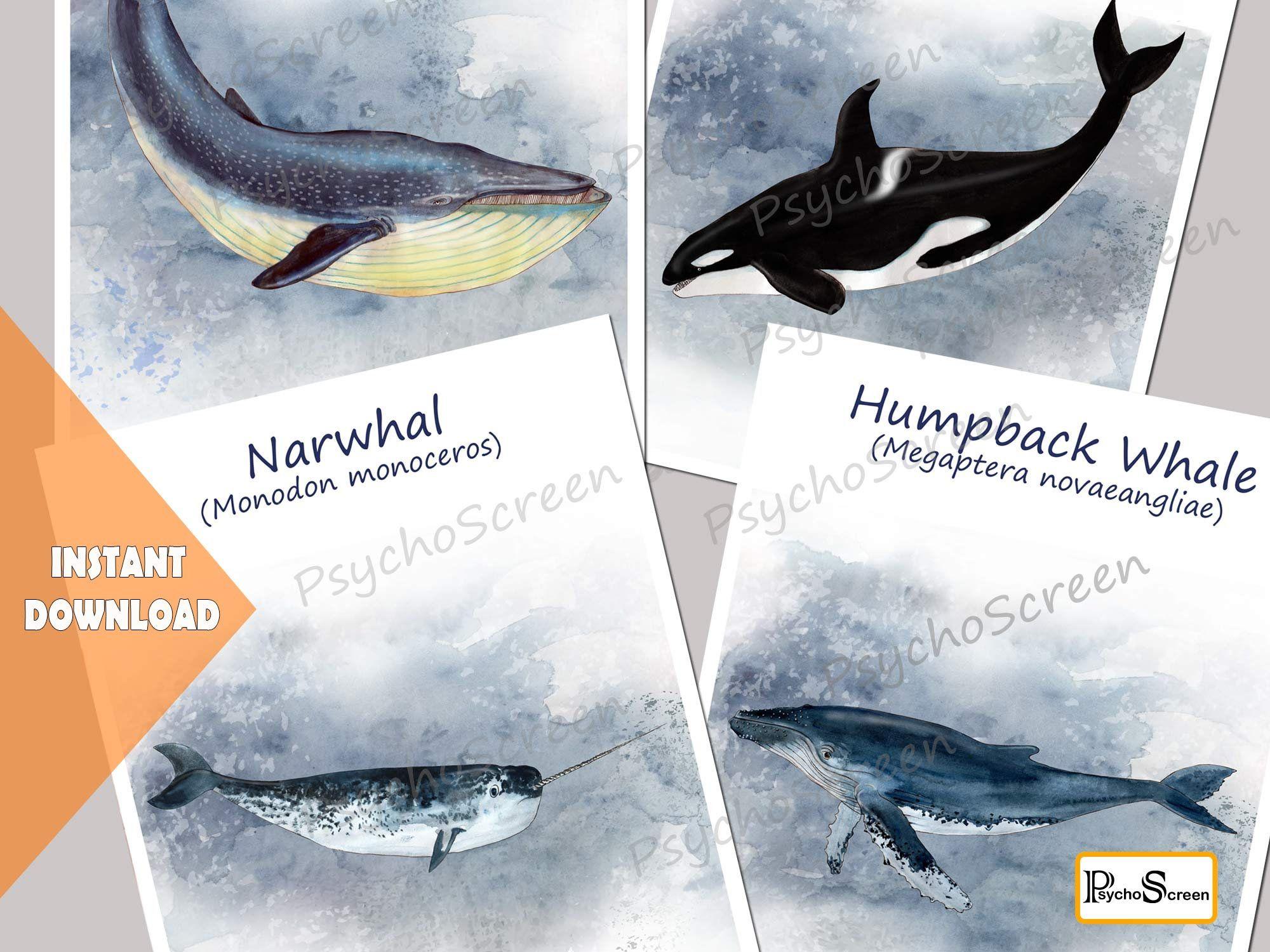 Whale Unit Study Mega Printable Wales Bundle Anatomy