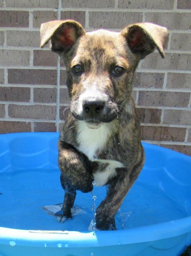 Adopt Flint on Poor dog, Cute animals, Animals