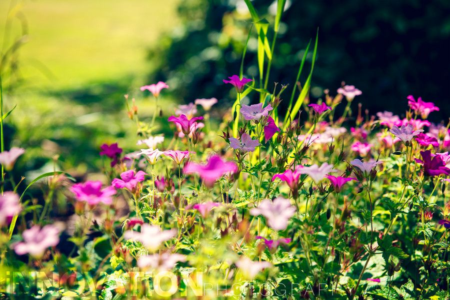 sunny flowers by Diyan Kantardgiev on 500px