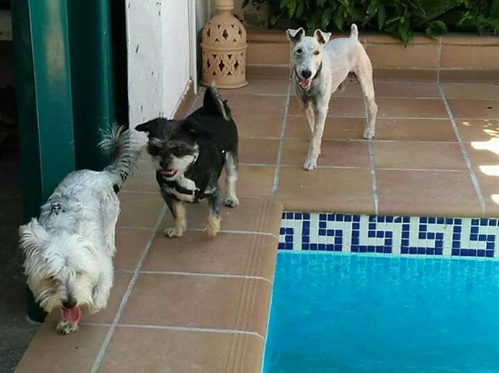 Ratos en casa 06/16 George, Cuqui, Willy