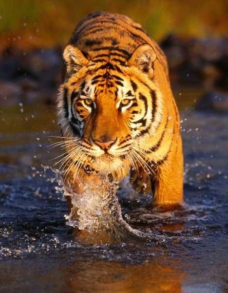 Flame On! 10 Amazing Orange Animals | WebEcoist