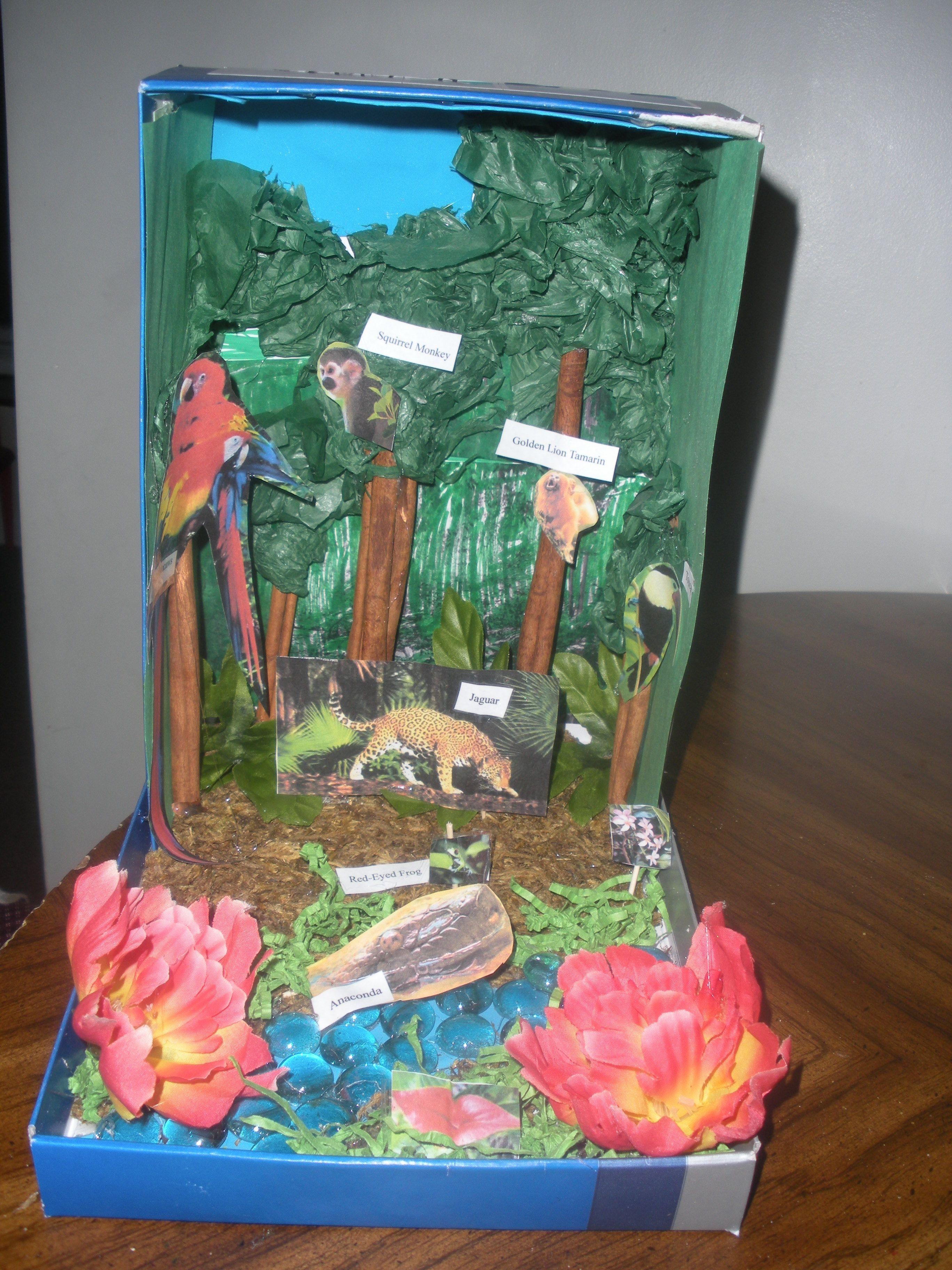 Abbi's rainforest diorama for school