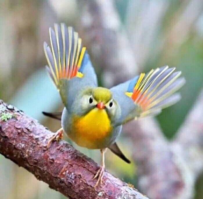 Pin By Ruth Jones On Nature In 2020 Beautiful Birds Birds Animals Beautiful