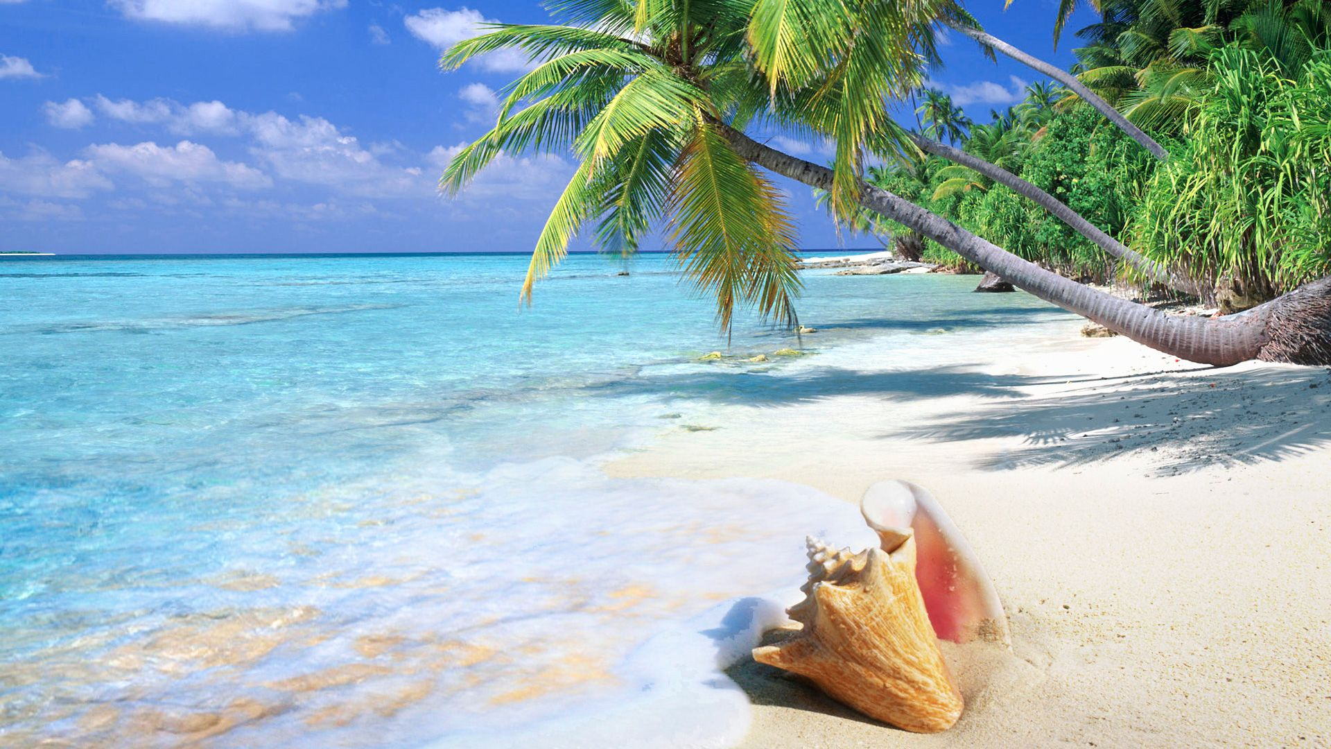 Hd Tropical Island Beach Paradise Wallpapers And Backgrounds: Tropical Beach Shell - 1920x1080 - 16:9