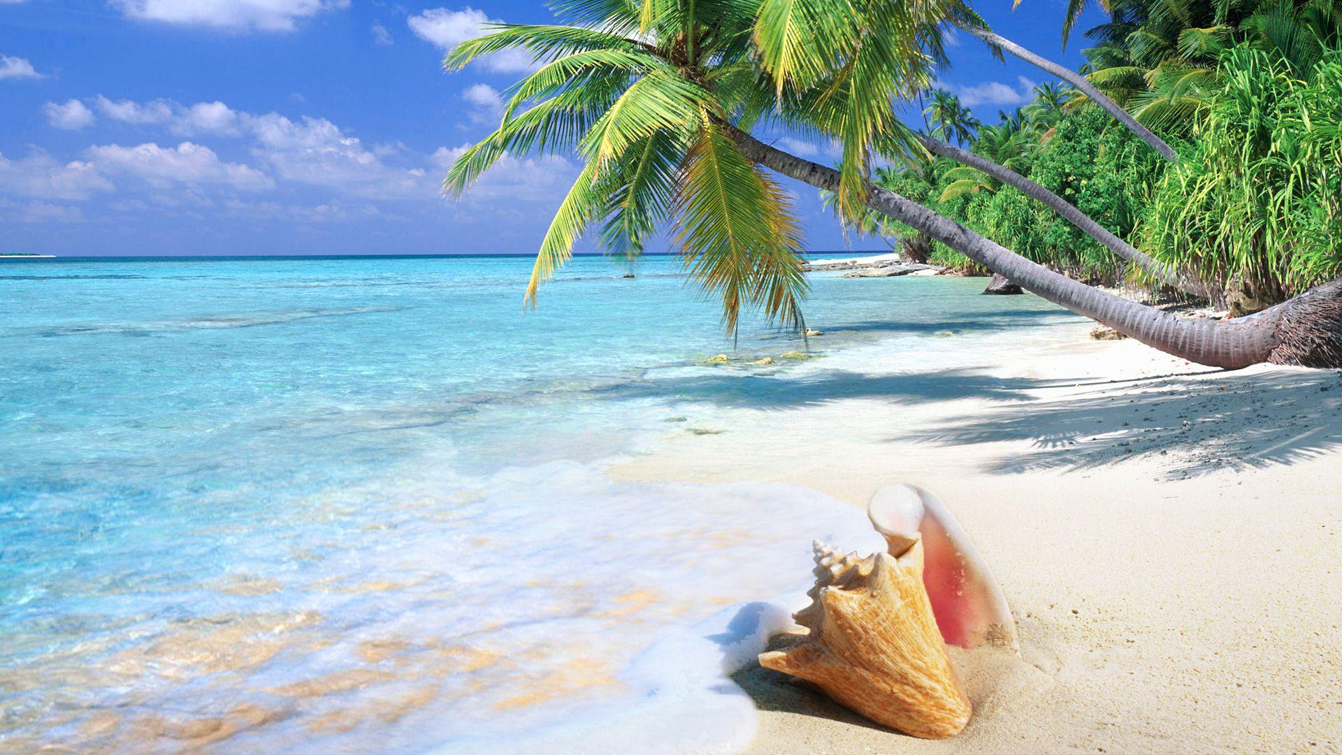 Tropical Beach | Tropical Beach Shell - 1920x1080 - 16:9 ...