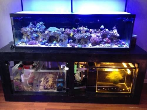 Brett Bia My Aquarium Is A 125 Gallon Mixed Reef With Custom Made 55 Sump And 50 Refugium 2 Jebao Dc12000 Pumps Rw 15 Heads