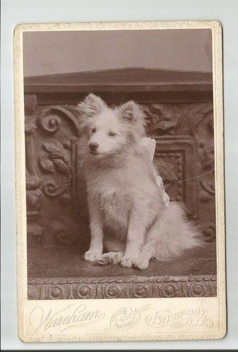 Cabinet Card Of Dog Wareham S Enamel Portraits Freeport Illinois