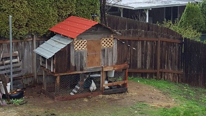 Hen house is ready to go...all reclaimed materials.