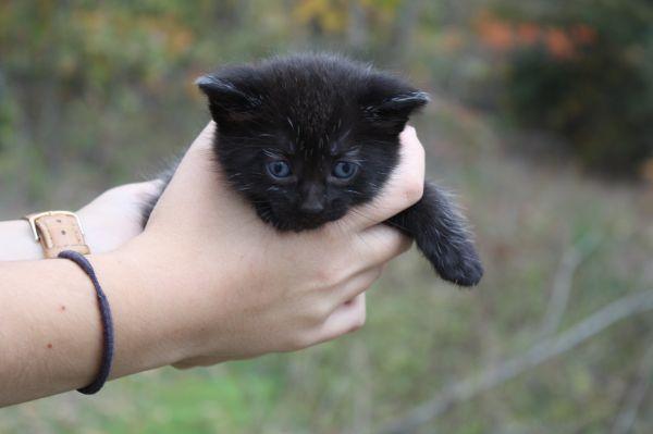 Free Adorable Kittens Cassville Mo Kittens Cutest Kittens