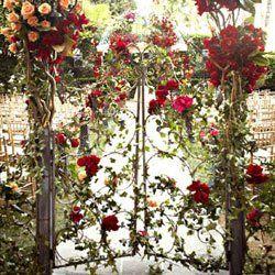 portão de rosas