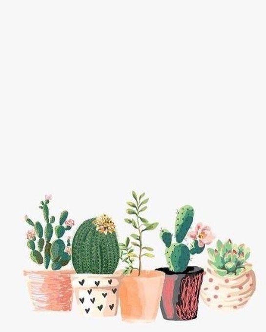 Different Cactus Iphone Wallpaper Lukisan Kaktus Poster Bunga Wallpaper Ponsel
