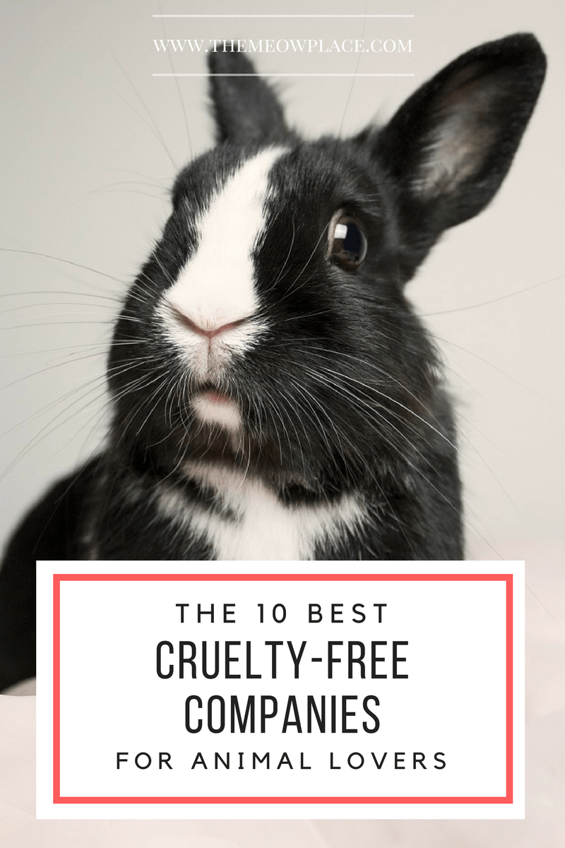 The 10 Best Cruelty Free Companies For Animal Lovers Animals Animal Lover Animal Advocacy