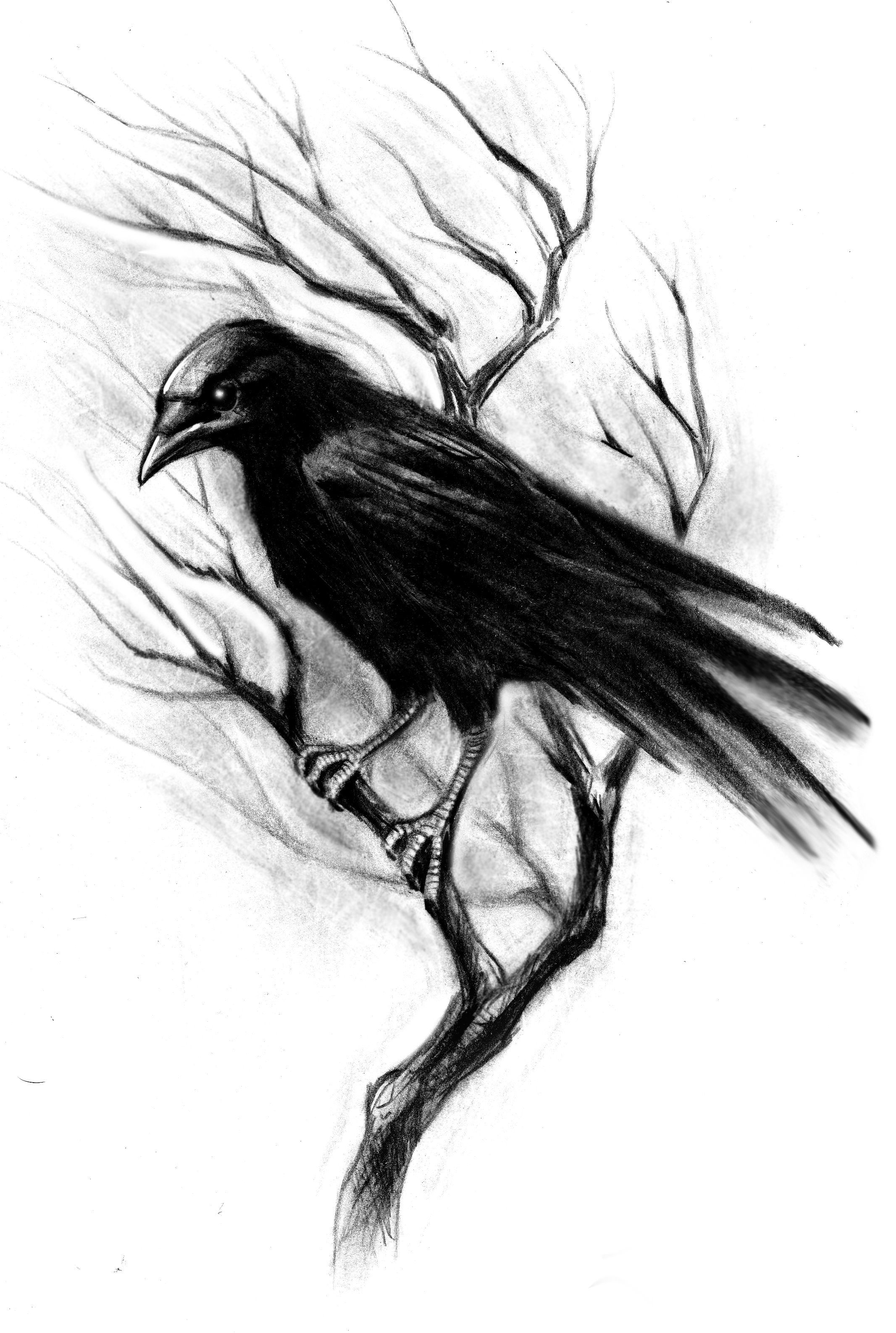 f57c41642084d Bird Drawings, Crows Drawing, Chalk Drawings, Crows Ravens, Tattoos With  Meaning,