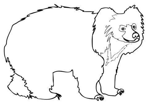 Sloth Bear Bear Coloring Pages