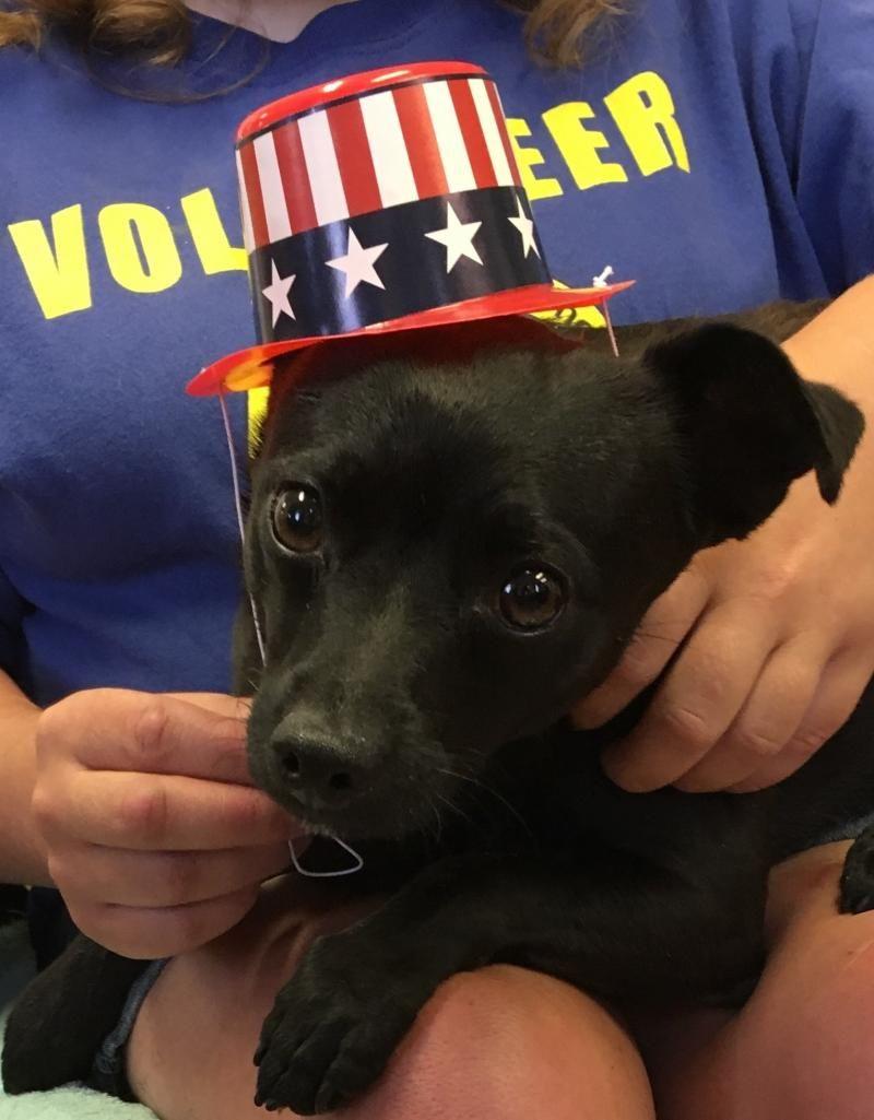 Adopt Gilligan on Animal shelter, Chihuahua, Chihuahua mix
