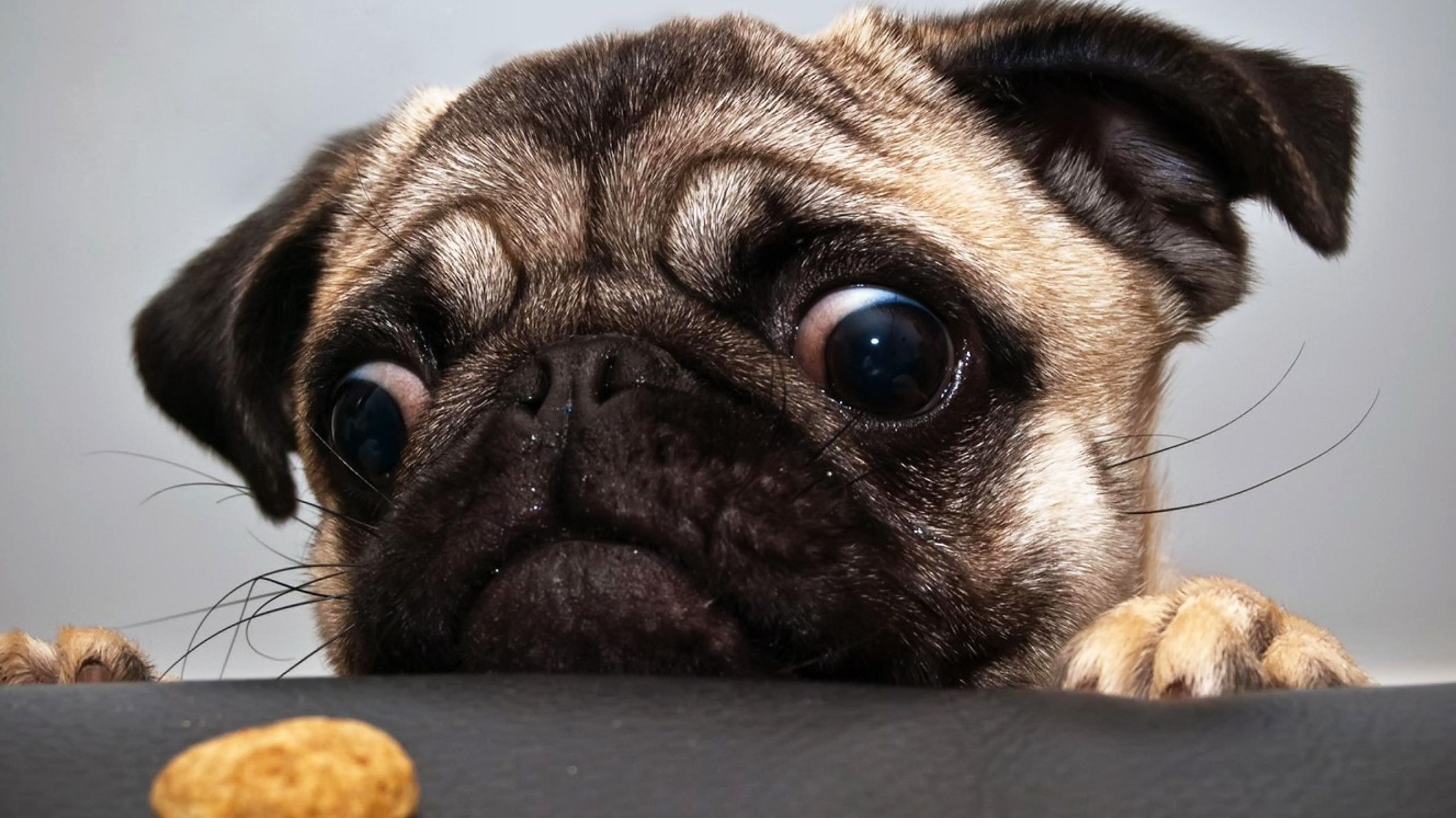 Black Pug Tumblr Sok Pa Google Pugs Funny Funny Animal Photos