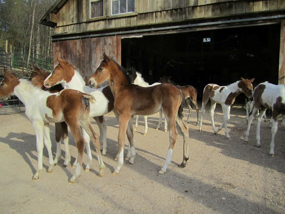 Kids N Horses Nurse Mare Foal Rescue Pets Animals Youcaring